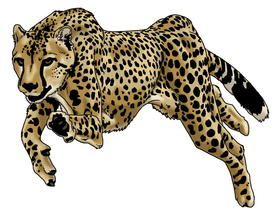 Jaguar Animal Coloring Pages Trend Home Design And Decor