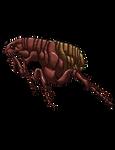 Paralytic Flea