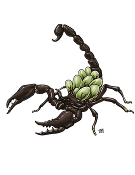 Spawning Giant Scorpion