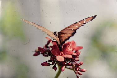 Butterflyscratch by daintyish