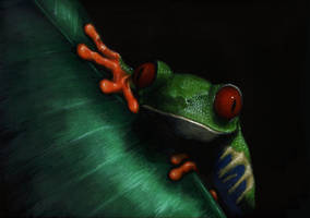 Tree Frog 1 by nudge1