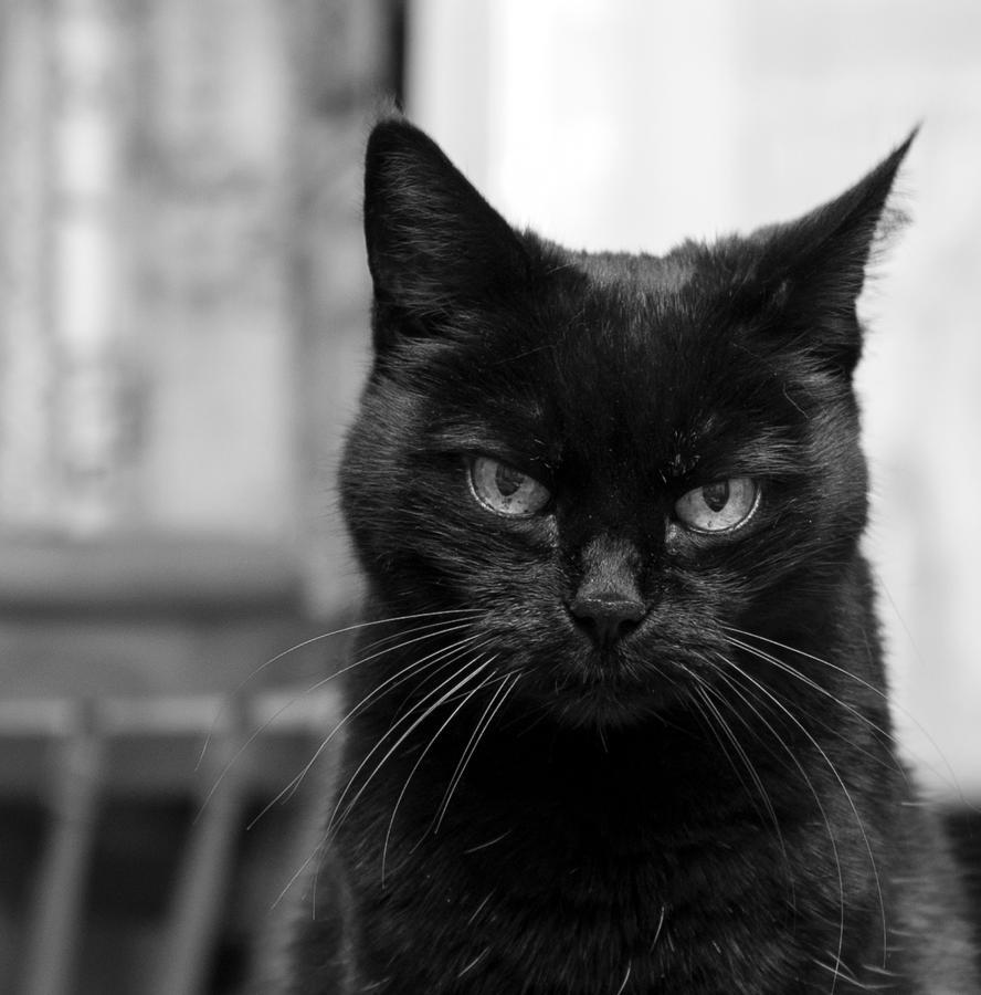 You again? by KittenCeleste