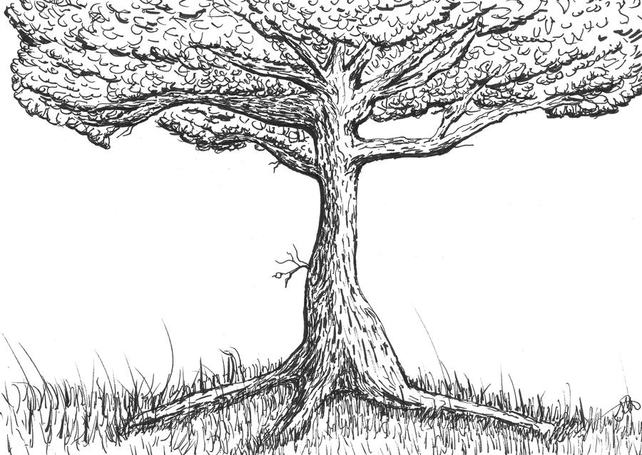 Line Art Of Trees : Line art tree by seanmann on deviantart