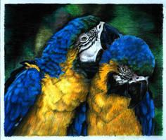 parrots by naglets