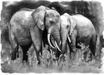 Black and White Elephants
