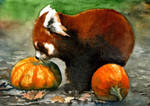 Red Pumpkin Panda