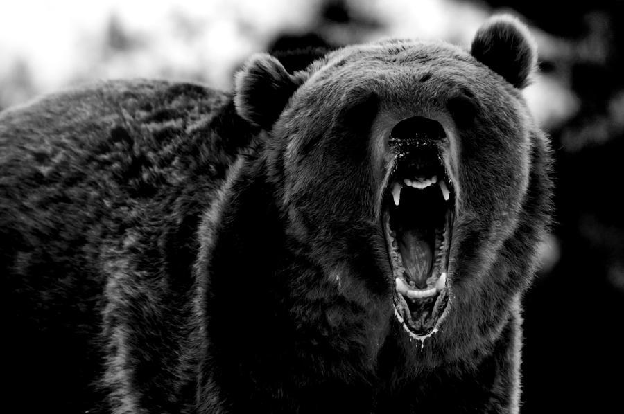 Scary Bear by Running-Ricketts on DeviantArt