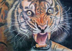 tiger by lazeeleelee
