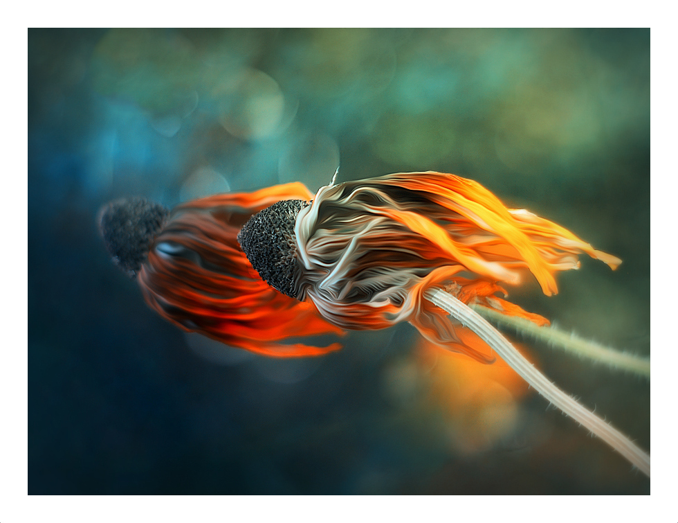 Jellyfish by Lottia1