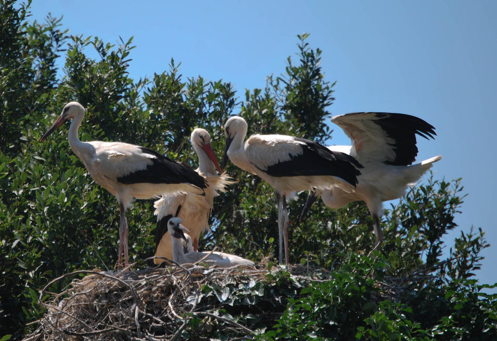 Storks by ReneHaan