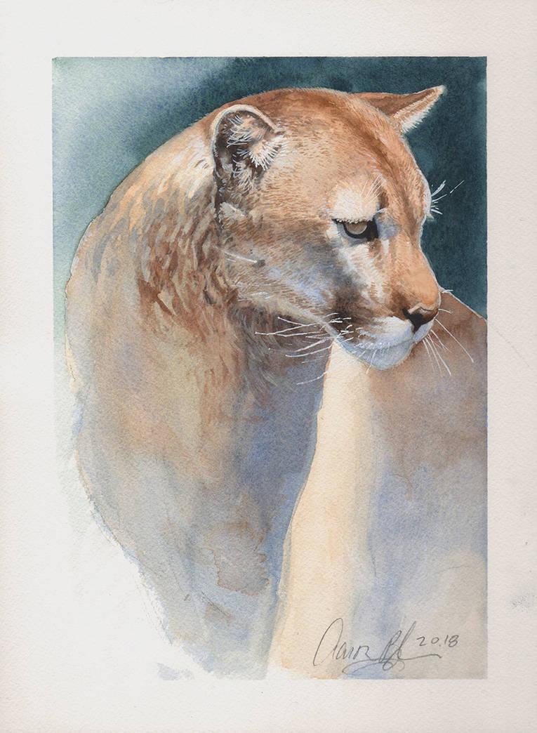e9599e5be4c55 Mountain Lion Watercolor 2018 by ablaise on DeviantArt