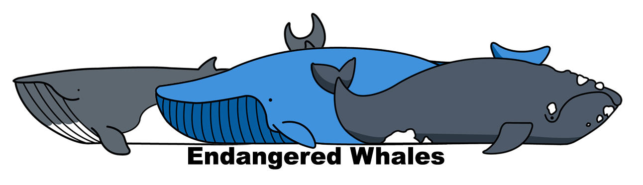 Endangered Whales by coconut-lane