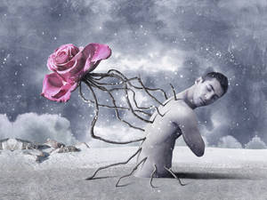 Dreaming of the rose