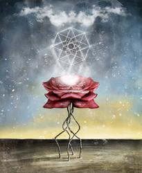 Rose of Brilliance