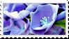 Stamp Hydrangea