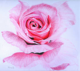 Pink Folds by SimplyACat