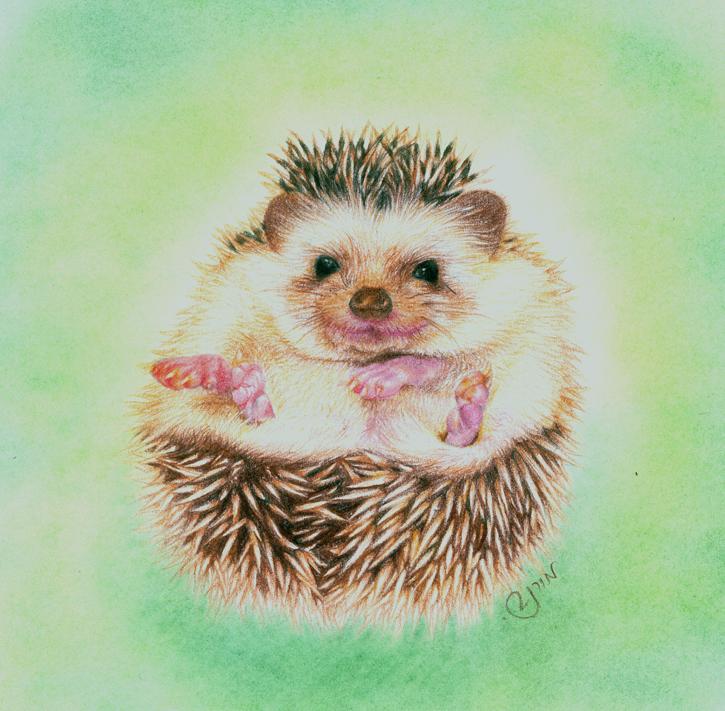 Hedgehog by SimplyACat