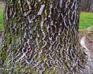 mossy tree by XxunpluggedxX