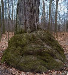 tree tumor by XxunpluggedxX