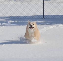 evil snow dog by XxunpluggedxX