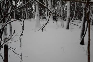 snow path by XxunpluggedxX
