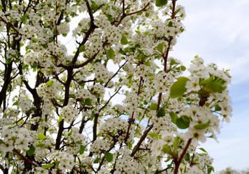 blossom by XxunpluggedxX