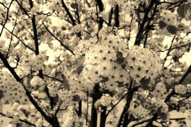 spring by XxunpluggedxX