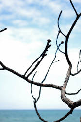 twigs by XxunpluggedxX