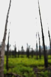 through blurred lines by XxunpluggedxX