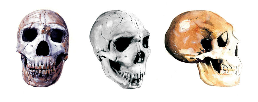 Neanderthal Skull Draw...