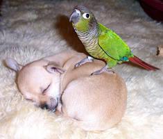 Okashi on a puppy by PfeffaRah
