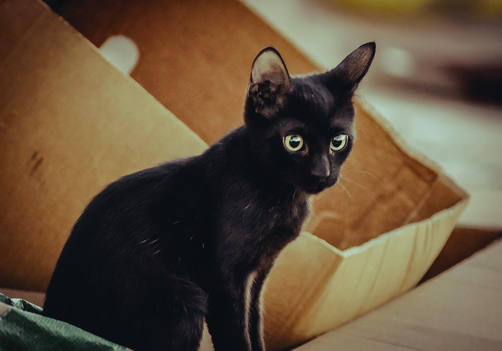 Black Cat by 3liah