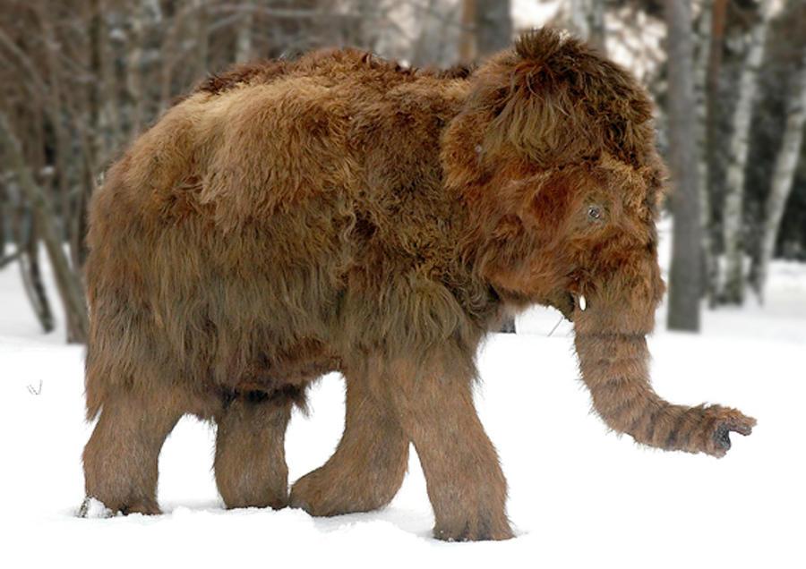 Baby Woolly Mammoth by el-cabrito