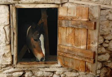 horse by onuralp-topal