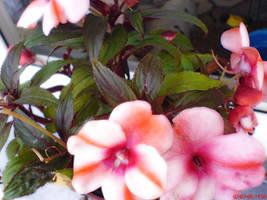 flower walpaper by themeart