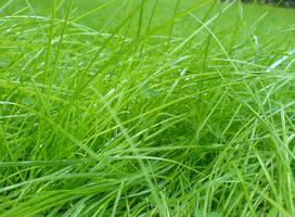 Cimenler green grass by themeart