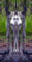 Wolf Face 1 by EyeOfHobus