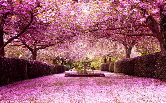 Blossom central