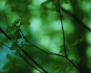 Puszcza Zielonka 2011 - 209 by Eufrosis