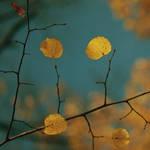 autumn 2011 - 8