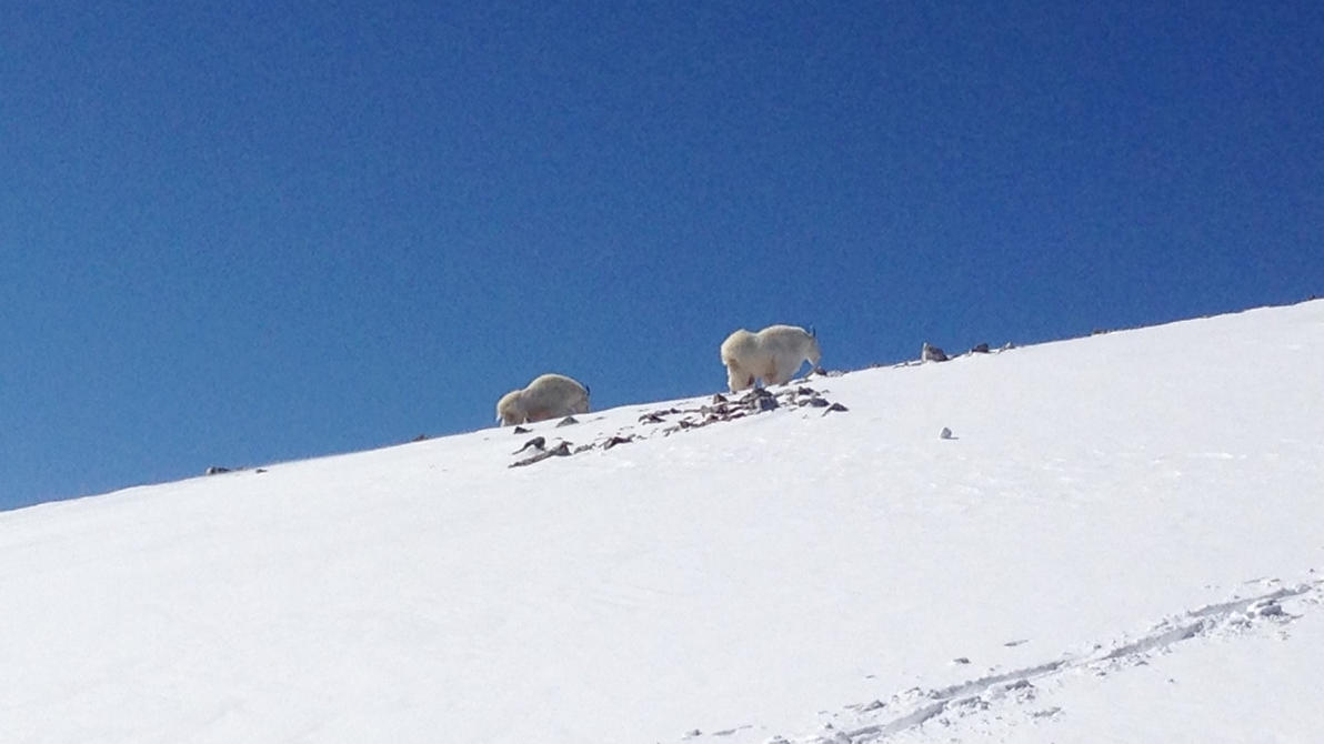 Mountain Goats Tour Nov Th