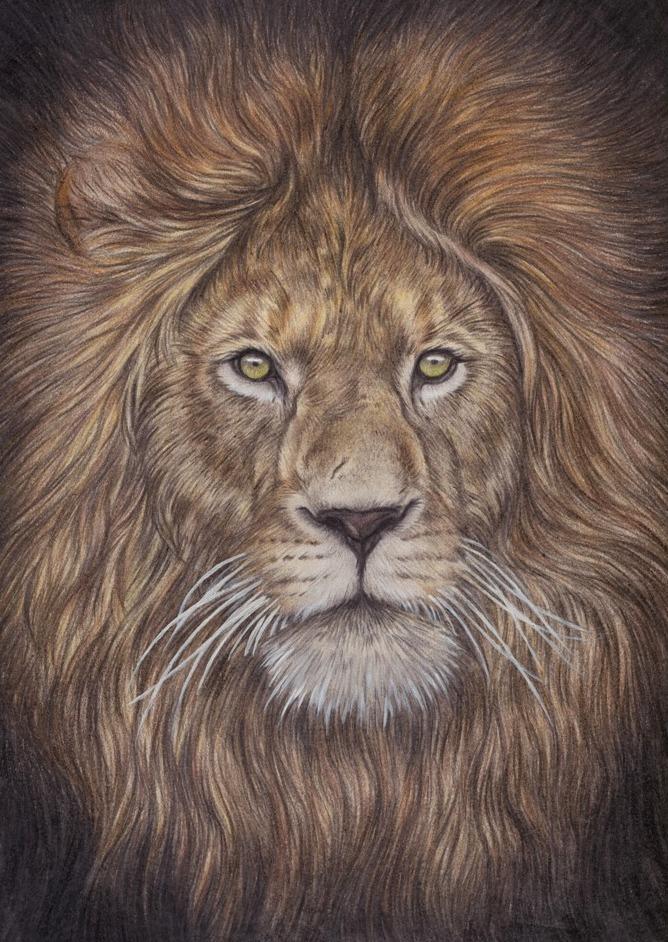 Lion by kritzelkiki