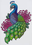 peacock01 by kritzelkiki