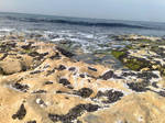 Beach first