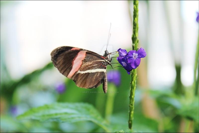 Sworn Butterfly