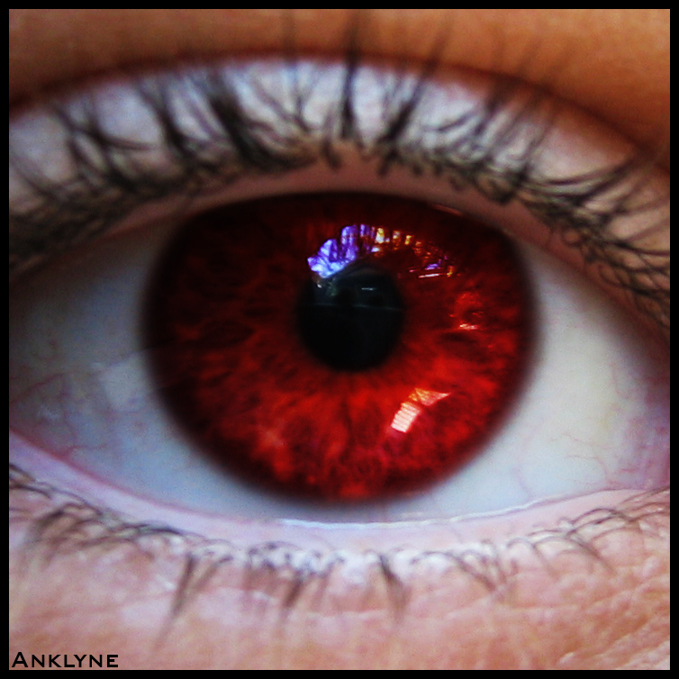 Red Iris by Anklyne on DeviantArt