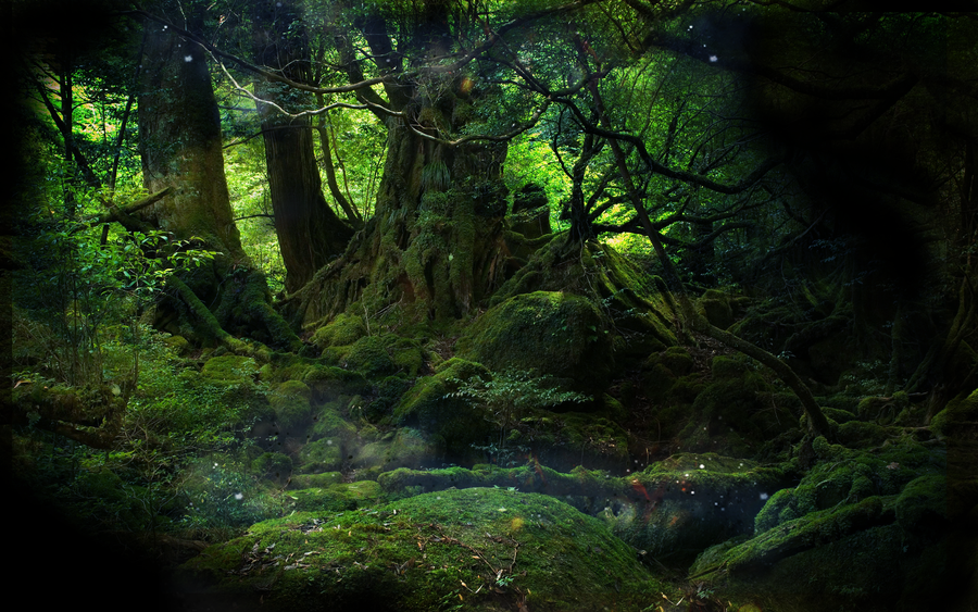 Mystical Forest By Conflictempire On Deviantart