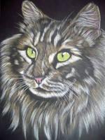 beutiful charly cat by shirls-art