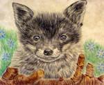 fox cub no to fox hunting