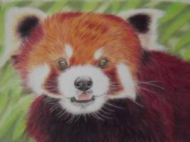 red panda by shirls-art